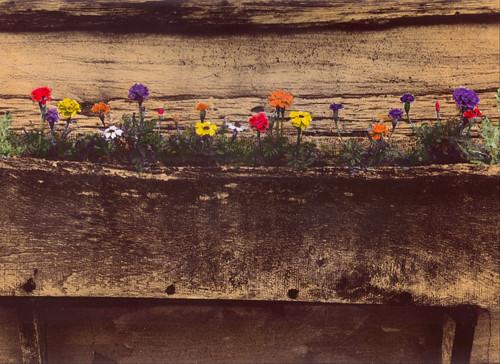 Hand color photo of a window/flower box   (c) Lynne Medsker