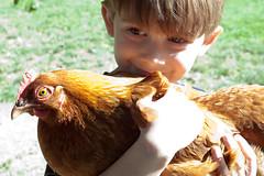 ellison and chicken