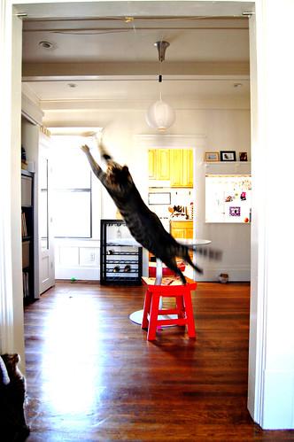 flying_03