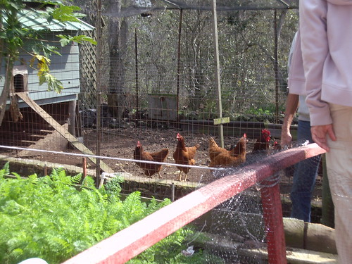 ELHARD'S CHICKEN YARD