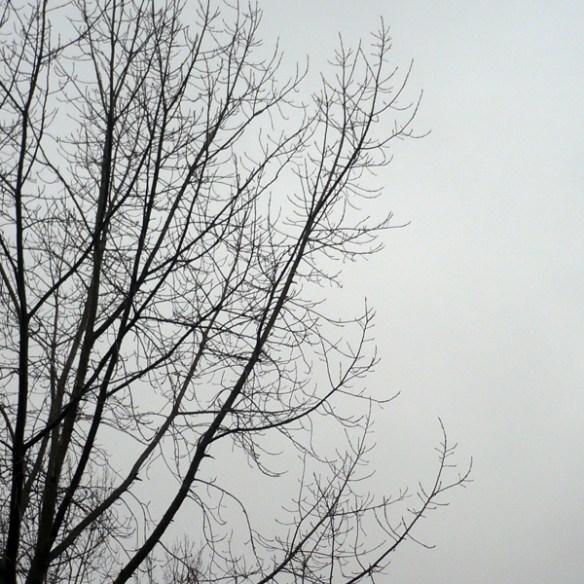 #222 - Winter