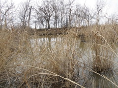 wetland 4
