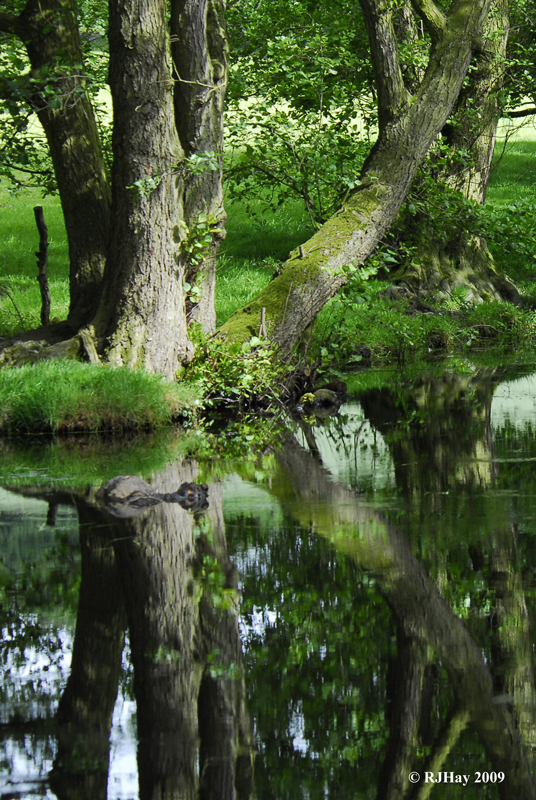 Reflections on the Past - Montgomery Canal