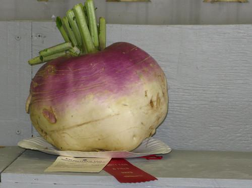 the turnip takes a ribbon