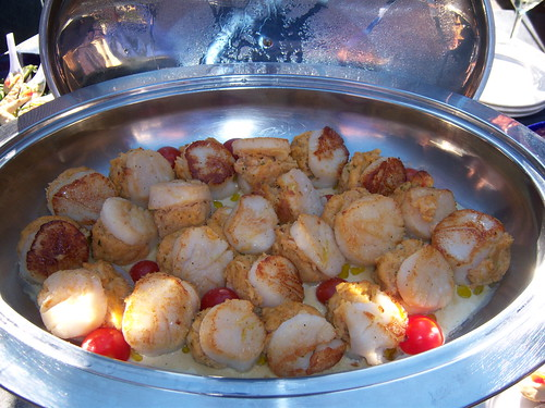 Lots of good scallops