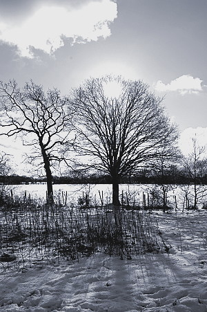 This photograph i loved as soon as i saw it. I think its miles better in black and white though, shows the contrast of the shadows on the snow much better.