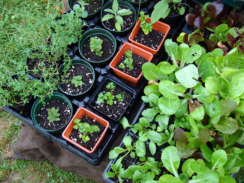 garden-to-be