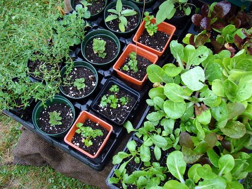 garden-to-be