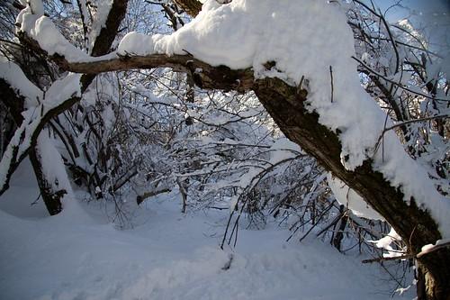 La piega della neve