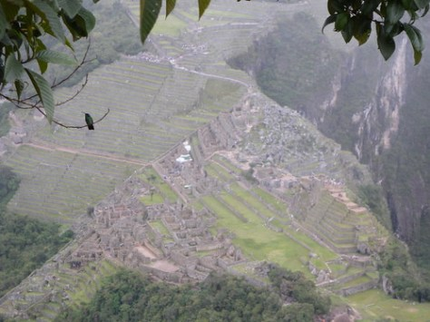 Hummingbird and Machu Picchu