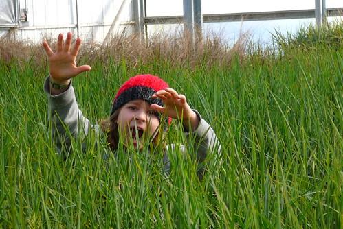 greenhouse fun