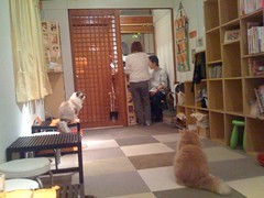 Jalala Cat Cafe