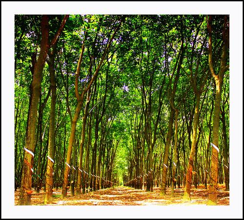 Trees por Rosario Cabeltis Apostol