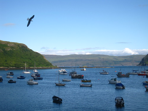 Boats and Bird Over Portree Habor