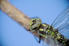 Dragonfly #dragonfly #macrophotography #closeu...