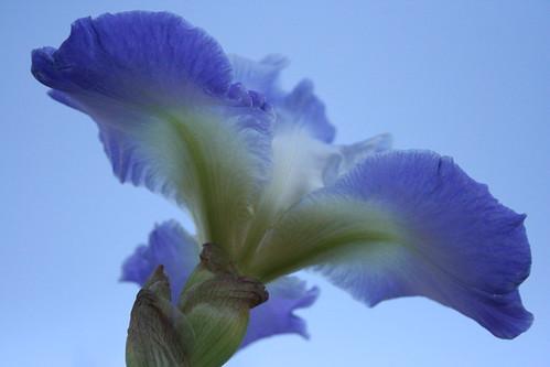 An Iris View