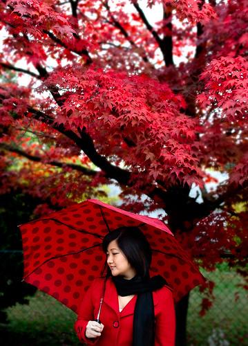 Last colours of autumn