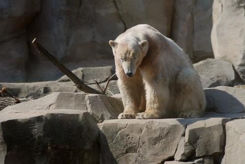 Viktoria im Zoo am Meer in Bremerhaven