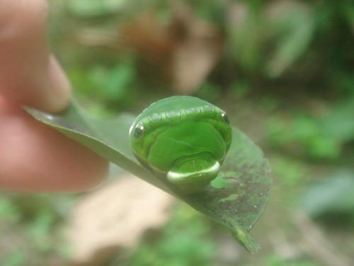 超可愛小綠蟲4