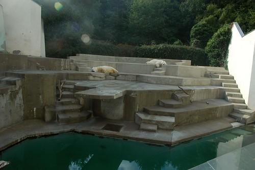 Eisbärenanlage im Zoo Mulhouse mit Jurji und Tina