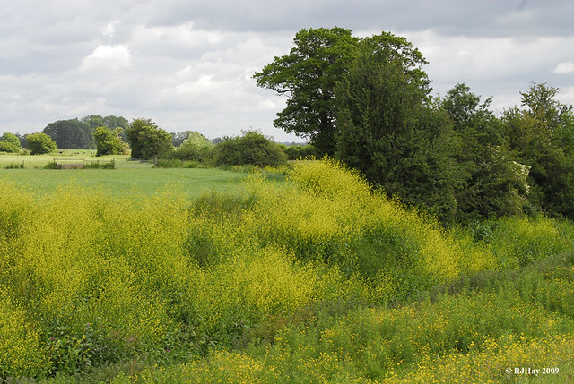 Buttercup Ditch