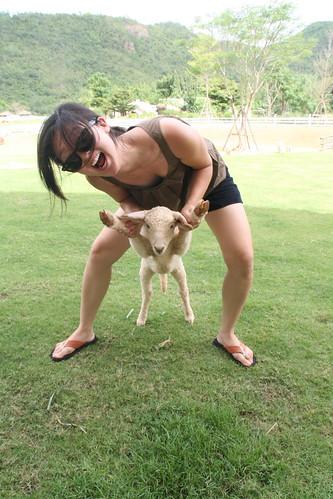 i love lamb!!
