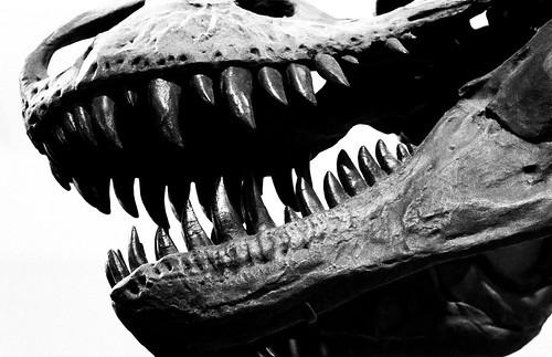 Museum — T-Rex. (Fuji Neopan 1600. Nikon F100. Noritsu Koki.)