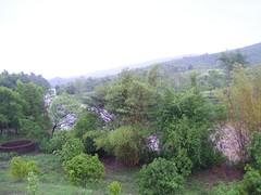 Tamarind_tree_farm2
