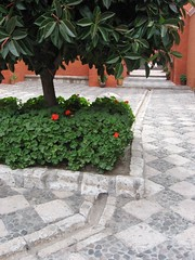 Outflow from planter (with rubber tree)