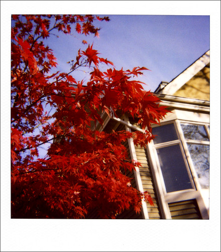 Red leaves on tenth