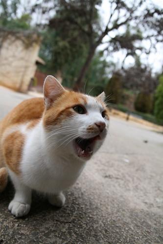Hungry Gato
