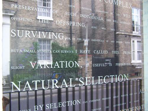 Darwin Window, Leverhulme Centre for Human Evolutionary Studies, University of Cambridge
