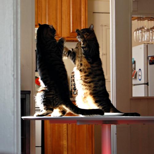 cat fight_03