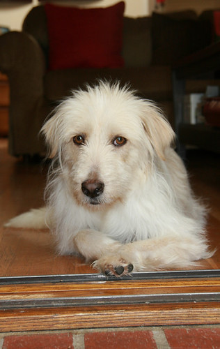 Jewels - waiting to be adopted by Eldad Hagar (Please support Hope For Paws).