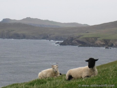 Sheep have all the luck - I wanna live with this view