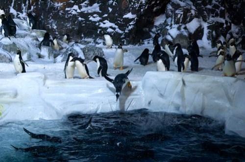 Vacation IId: SeaWorld 10
