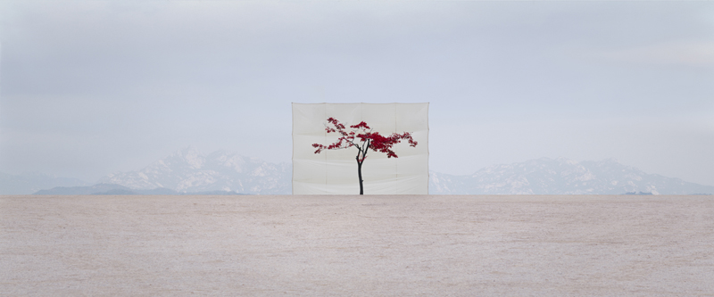 Tree #5, from the series Photography-Act, 2007