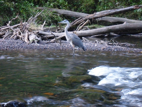 Heron on the Gunpowder River