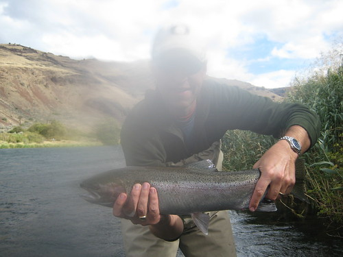 Deschutes Steelhead