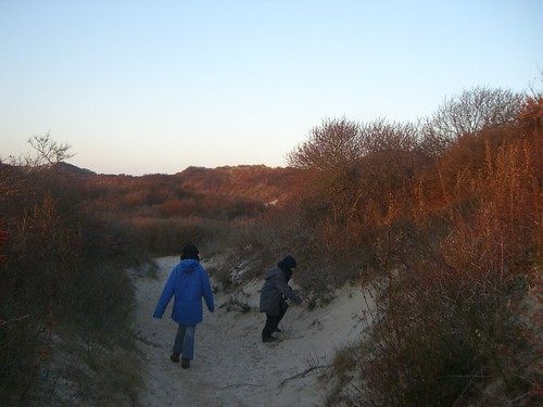 Sanddunes with Sea-Buckthorn