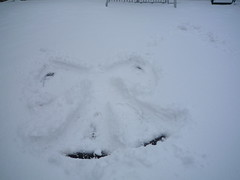 Snow Day 02-02-09 (24)