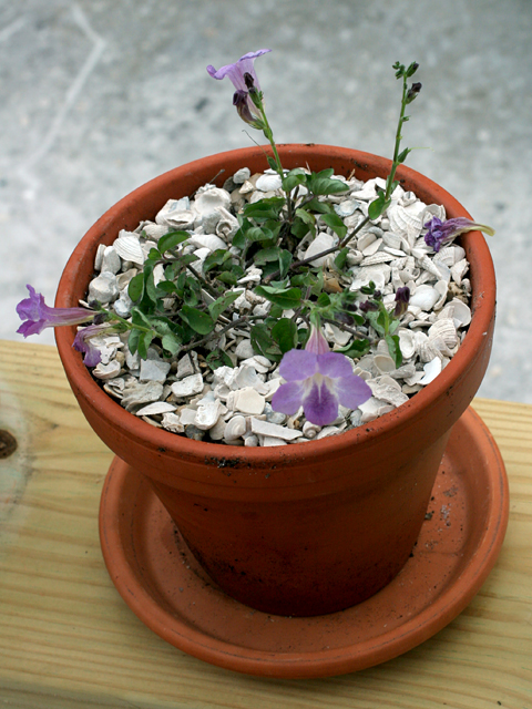 Mystery-Wildflower-Pot
