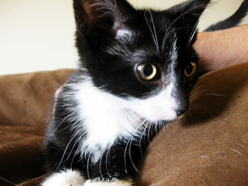 tuxedokitten (by jesh\)