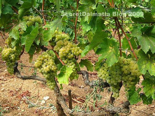 Debit grapes