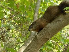 groundhog in tree by ERuthK bodysoulspirit