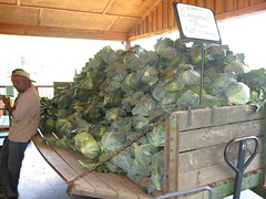 osage farms cabbage cart