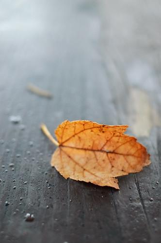 Fall Leaf on Outside Table