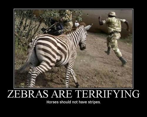 zebras-are-terrifying