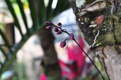 Tiny Orchids