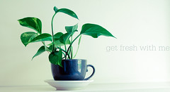 green coffee cups